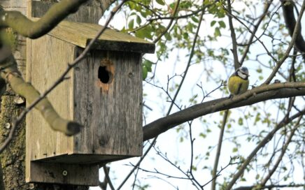 Make your own nest box