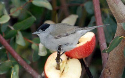 Feed the birds