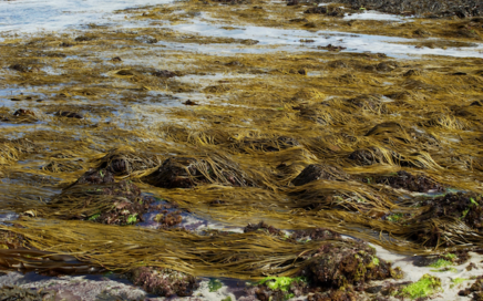 Make use of seaweed as a food and a fertilizer