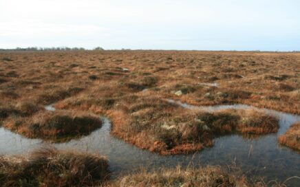 Learn about bogs and how to protect them