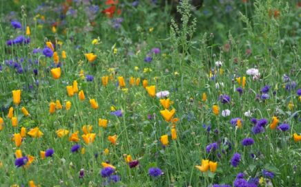 Sow wildflower seeds
