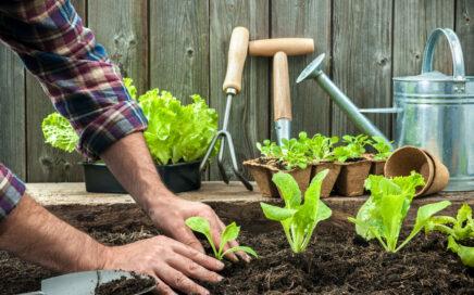 Grow and eat