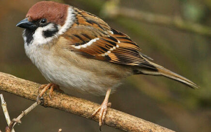 Can the Dawn Chorus help save our species? 14 April